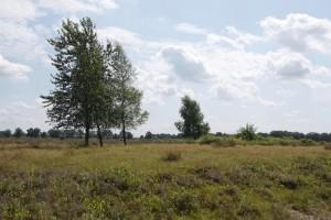 omgeving  DSF2490