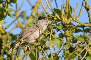 vogels DSC 0749