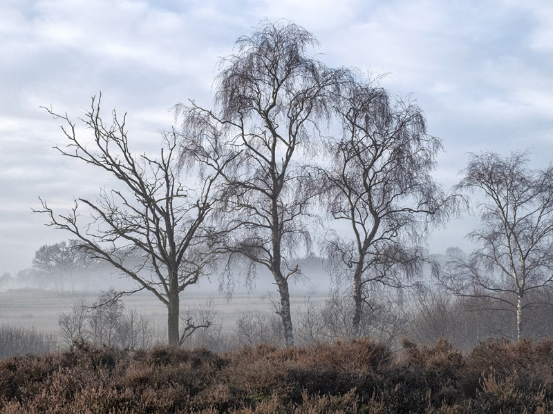 Reestdal in de mist