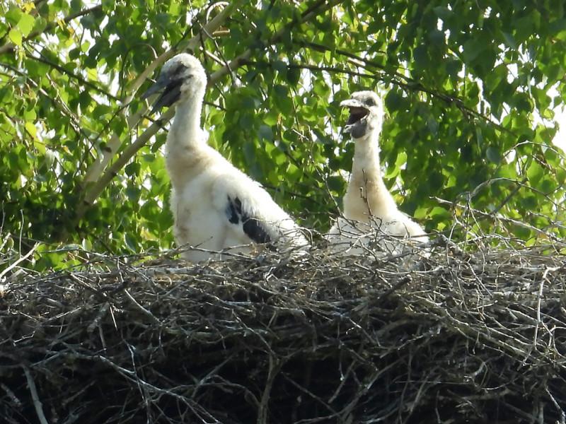 In het grote nest