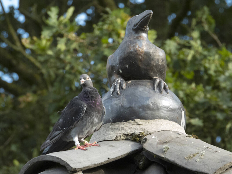 Raaf en duif
