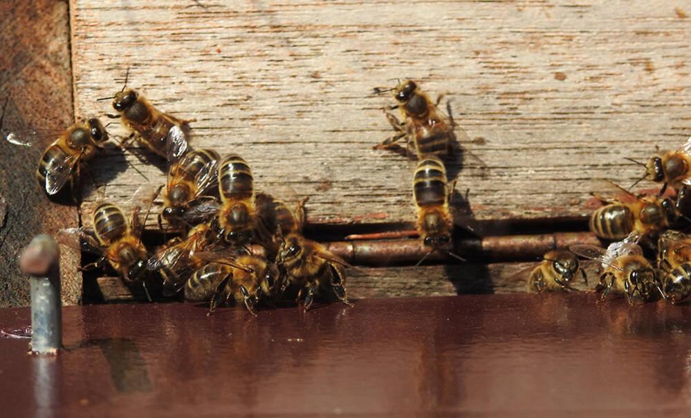 Zonder woning geen honing