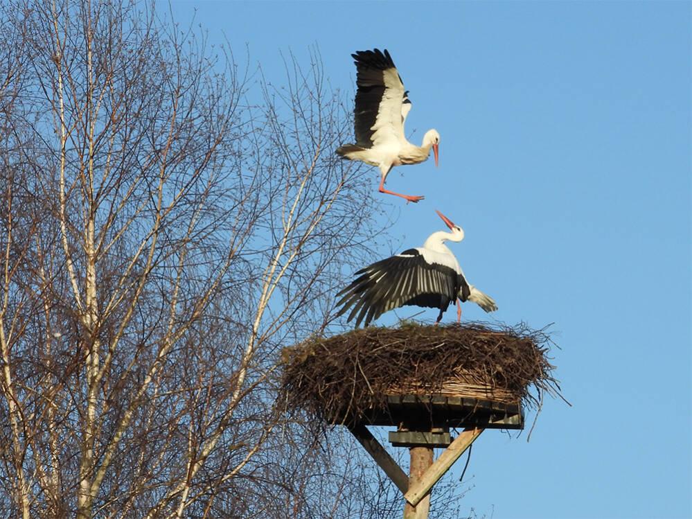 Gevecht om het nest