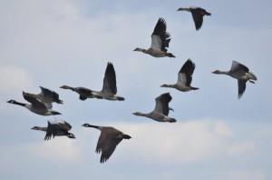 vogels DSC 0424