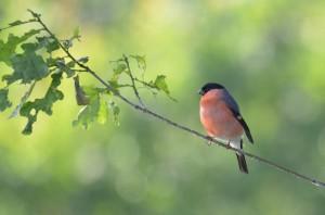vogels DSC 6833 (2)
