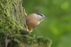 vogels DSC 6875 (2)
