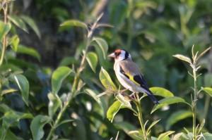 vogels DSC 7205
