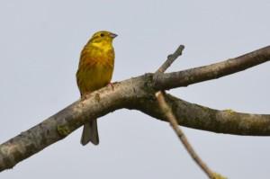 vogels DSC 9958
