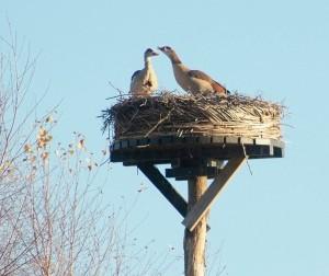 vogels  DSF5804
